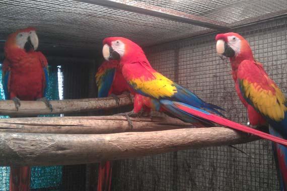 Creekwoodbirds com | exotic birds breeders in india, bird